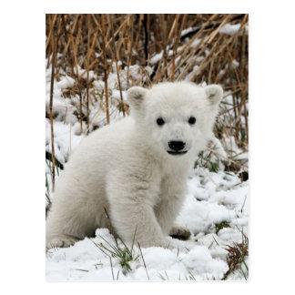 Carte Postale Ours blanc de bébé
