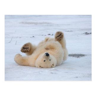 Carte Postale ours blanc, maritimus d'Ursus, petit animal