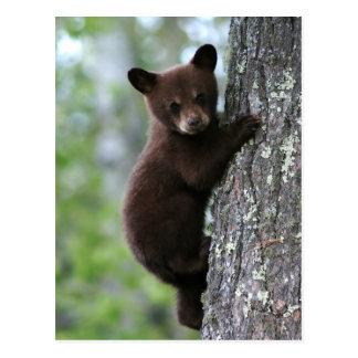 Carte Postale Ours CUB grimpant à un arbre
