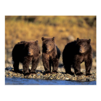 Carte Postale Ours gris, ours brun, petits animaux,