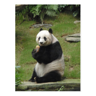 Carte Postale Ours panda mangeant un certain bambou