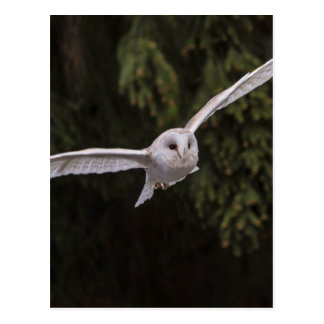 Carte Postale Owl flying through the woods
