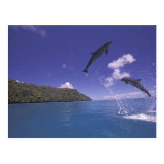 Carte Postale Pacifique, Micronésie, Palaos, Bottlenose 3