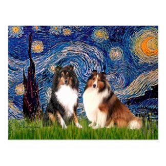 Carte Postale Paires de chien de berger de Shetland - nuit