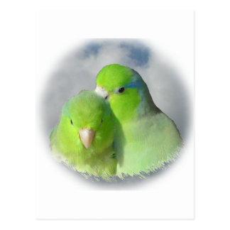 Carte Postale Paires vertes de parrotlet