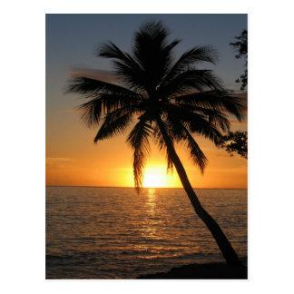 Carte Postale Paix et joie des Fidji de palmier de noix de coco