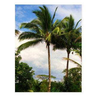 Carte Postale Palmier hawaïen