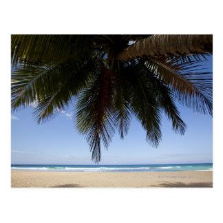 Carte Postale Palmier le long de mer des Caraïbes