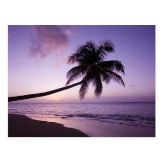 Carte Postale Palmier solitaire au coucher du soleil, plage 2 de