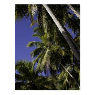 Carte Postale Palmiers sur une île tropicale des Caraïbes