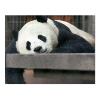 Carte Postale Panda géant
