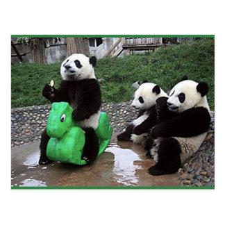 Carte Postale pandabeer