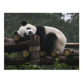 Carte Postale Pandas géants à la protection et aux 3 de panda
