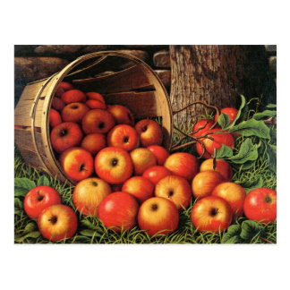 Carte Postale Panier des pommes