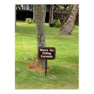 Carte Postale Panneau d'avertissement d'Hawaï de noix de coco