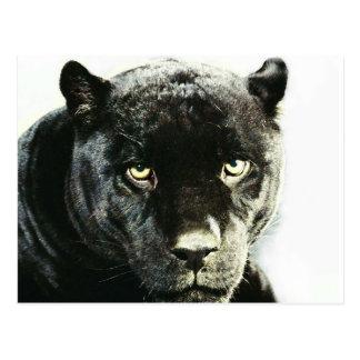 Carte Postale Panthère noire de Jaguar