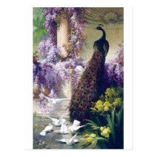 Carte Postale Paon et peinture blanche d'oiseaux de colombes