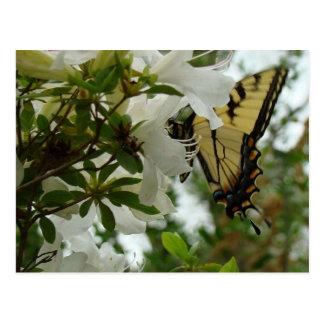 Carte Postale Papillon au printemps