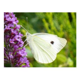 Carte Postale Papillon blanc 1