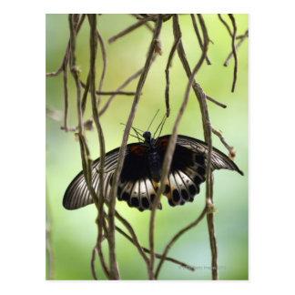 Carte Postale Papillon de machaon d'écarlate (Papilio