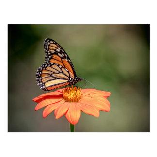 Carte Postale Papillon de monarque sur une fleur orange