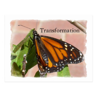 Carte Postale Papillon de transformation