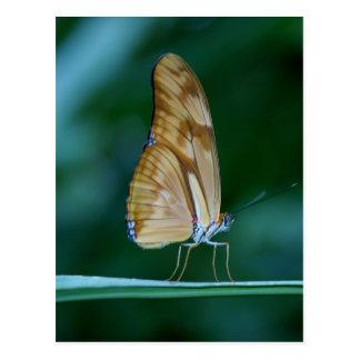 Carte Postale Papillon d'iulia de Dryas