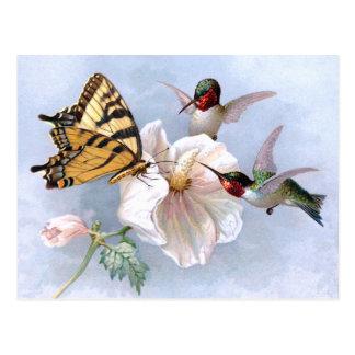 Carte Postale Papillon et colibris