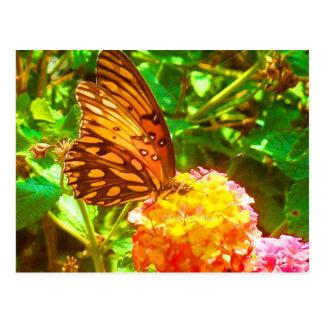 Carte Postale Papillon (papillon)