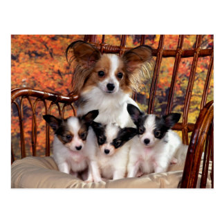 Carte Postale Papillon puppies with mum