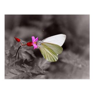 Carte Postale Papillon sur la fleur rose