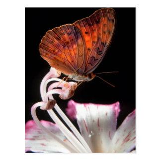 Carte Postale Papillon sur la fleur, Rustenburg, du nord-ouest