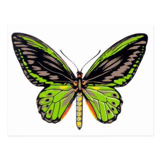 Carte Postale Papillon vert