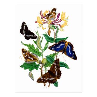 Carte Postale Papillons et chèvrefeuille rouge