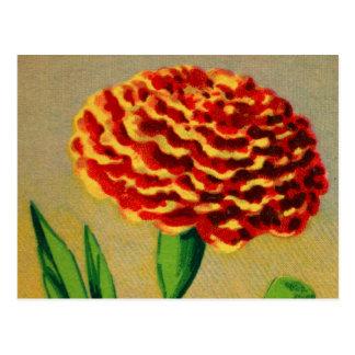 Carte Postale Paquet français vintage de graine de fleur