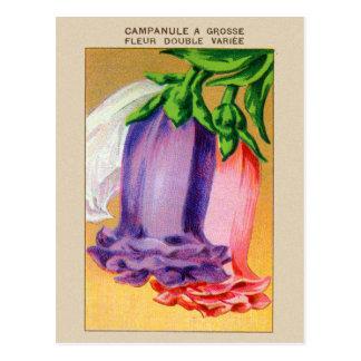 Carte Postale Paquet français vintage de graine de fleur de