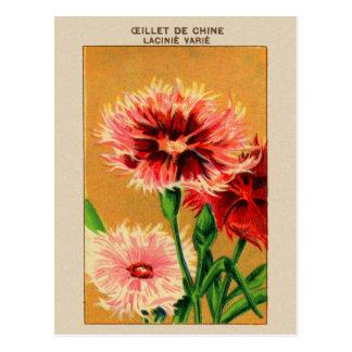 Carte Postale Paquet vintage de graine de fleur d'oeillet de la