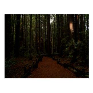 Carte Postale Paradis de séquoia