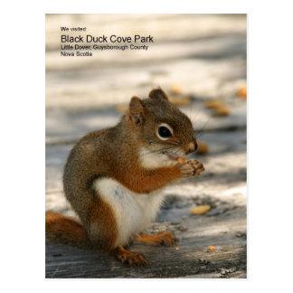 Carte Postale Parc de crique de canard noir