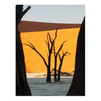 Carte Postale Parc de Namib-Naukluft, Sossusvlei   Vlei mort