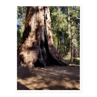 Carte Postale Parc national de séquoia : Canicules