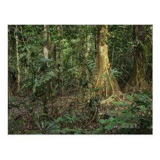 Carte Postale Parc national de Taman Negara, Pahang, Malaisie