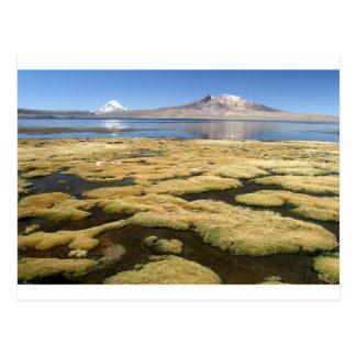Carte Postale Parc national Tarapaca Chili de Chungara Lauca de