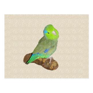 Carte Postale Parrotlet masculin vert