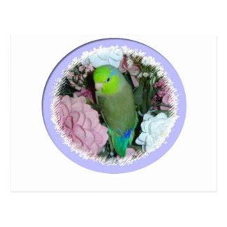 Carte Postale Parrotlet masculin vert avec des fleurs