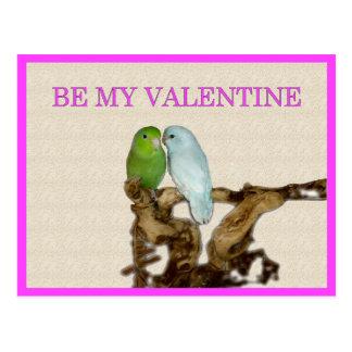 Carte Postale Parrotlet Valentine