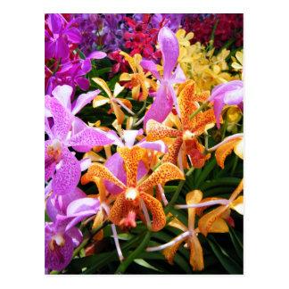 Carte Postale Partie d'orchidée