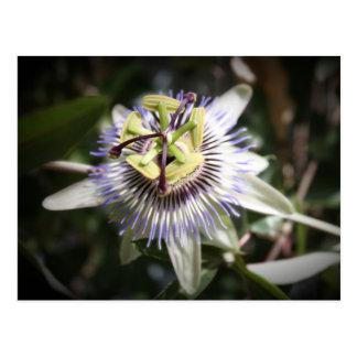 Carte Postale passiflora,flower, mylifeisart