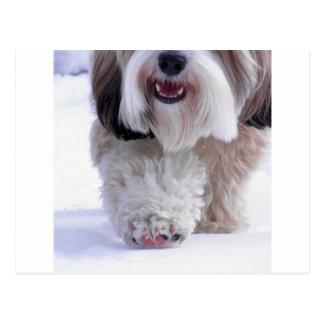Carte Postale Patte pelucheuse mignonne de neige de Terrier