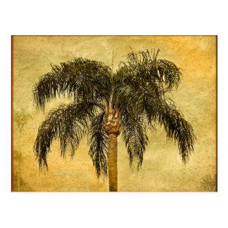 Carte Postale Paumes vintages hawaïennes de palmier tropical